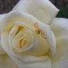 2011/11/07 白鳥と花蜘蛛