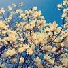 春の海のanniversary