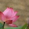 雨上がりの「黄檗山萬福寺」
