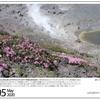 山の自然学カレンダー2020 5月・新燃岳火口内に咲くミヤマキリシマ