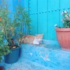 【モロッコ②】青い町と白い街