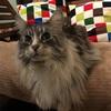 【ベッドもソファも猫もあったか】ニトリのNウォーム敷パッドがとっても優秀!
