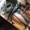 【イベントお手伝い】岩手県大槌町の定置網で獲られたサバを食べる会
