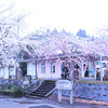 【能登】駅のホームにトンネルのように咲き誇る「能登さくら駅」の桜
