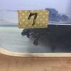 トウブドロガメ、'18子亀の成長3。
