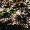 散る桜、苔生す木陰、蛙跳ぶ