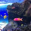 広島の水族館