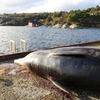 海中のプラスチック廃棄物で苦しむクジラたちの惨状