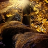 「初めの一歩」⭐️新世界創造♪<日干支読み>2017年8月25日【甲申】【天馳星】<年・月・日>三重申酉天中殺😇