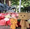 札幌市 札幌諏訪神社で眺めた秋の花手水