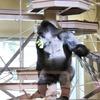 東山動植物園での写真 09 ゴリラ🦍、チンパンジー🐒