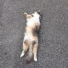 道に落ちている猫たん。