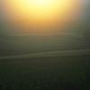 浮かぶ麦畑
