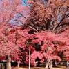 3週連続の京都散策。今回は紅葉乱舞散策です。