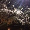 桜 soul music (桑薗)