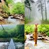 テンカラ釣行記:2020年6月上旬の関川支流にて、霧と針葉樹とイワナの小渓