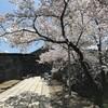 篠山へ花見