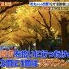 アホの坂田info