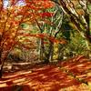 秋の終わりにゆったりと過ごしたいMIX