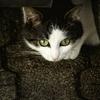 【前兆】大阪市の飼い猫がまた異常行動~大阪北部地震の大きめの余震か?+全国で地震が気になる地域