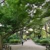 秋の新宿御苑散歩