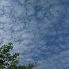 ◆'18/05/27      摩耶山山開き 春の登山会①