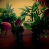 蓮の花と笹餅と***