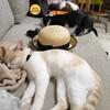 毛玉と猫さん