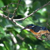 Nikon1で野鳥撮影