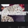 husahusa流アイキャッチの作り方!photoEditor:PixlrXでお手軽簡単に作成可能!?powerpointがあればなお良し!