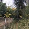 久しぶりの林の散策