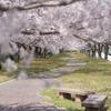 今年訪れた富山の桜マップ【2020年版】