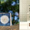 透明なキューブに閉じ込められた植物が美しい!