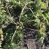 状況暗転 冬場の環境による野菜への影響
