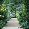 「寒露の日」の雨上がりに【秋のバラ園】を訪れました~中之条ガーデンズ(群馬県)~