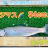 三河湖ニジマス釣り情報🌈