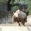 混雑する上野動物園でなんとかやっていく方法(パンダの写真なら見せてやる)