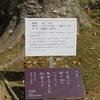 万葉歌碑を訪ねて(その1134)―奈良市春日野町 春日大社神苑萬葉植物園(94)―万葉集 巻十一 二六五六