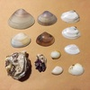 漂流物 : 片瀬江ノ島東浜 と 江の島界隈の海浜整備情報