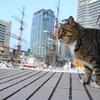 12月後半の #ねこ #cat #猫 その2