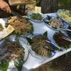 【いすみ】里山の「自然」・豊かな「食」・食を支える「農」…いすみ的ゴールデンウィークの過ごし方