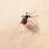 屋内での蚊の隠れ場所を速攻で見つけるには?超簡単に退治する方法は?