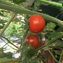 ベランダの小さな家庭菜園