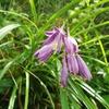 茶草場に咲く夏の花
