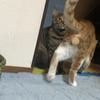㉖のら猫えんちゃんばんちゃん日記