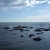 シノリガモのいる岸壁に押し寄せるヨシガモの群れと海上を飛ぶヨシガモの番