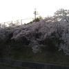 夜桜をAQUOSphoneで撮影した結果・・・