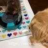 猫犬話:遊ぶ時も一緒なわんことにゃんこ