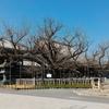 京都七条周辺へ、西本願寺・西本願寺伝道院・京都タワー・京都駅ビル