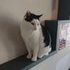 猫カフェ「猫まる茶屋」で猫堪能